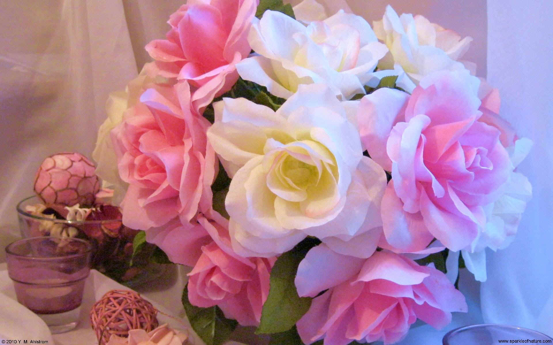 0357 pink and white roses W 1920x1200.jpg (264393 bytes)