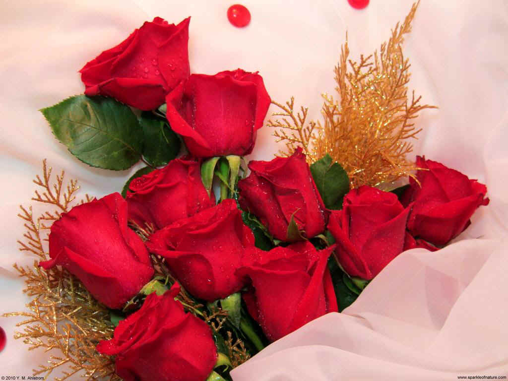12736 red rose bouquet 1024x768.jpg (112065 bytes)