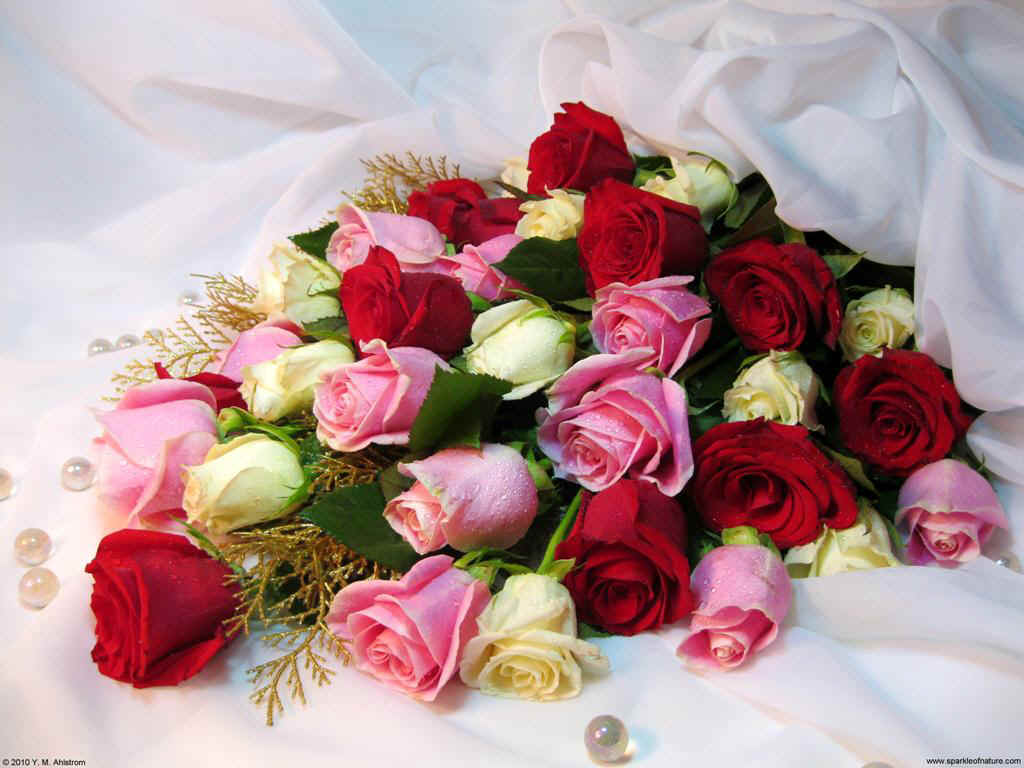13625 rose bouquet 1024x768.jpg (115965 bytes)