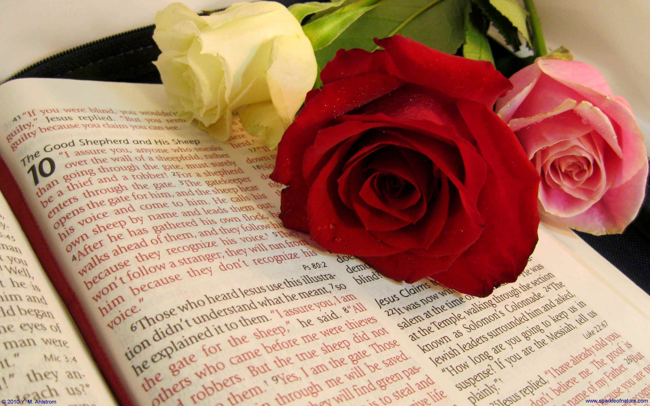 14360 bible with roses 2 w 2560x1600.jpg (467534 bytes)