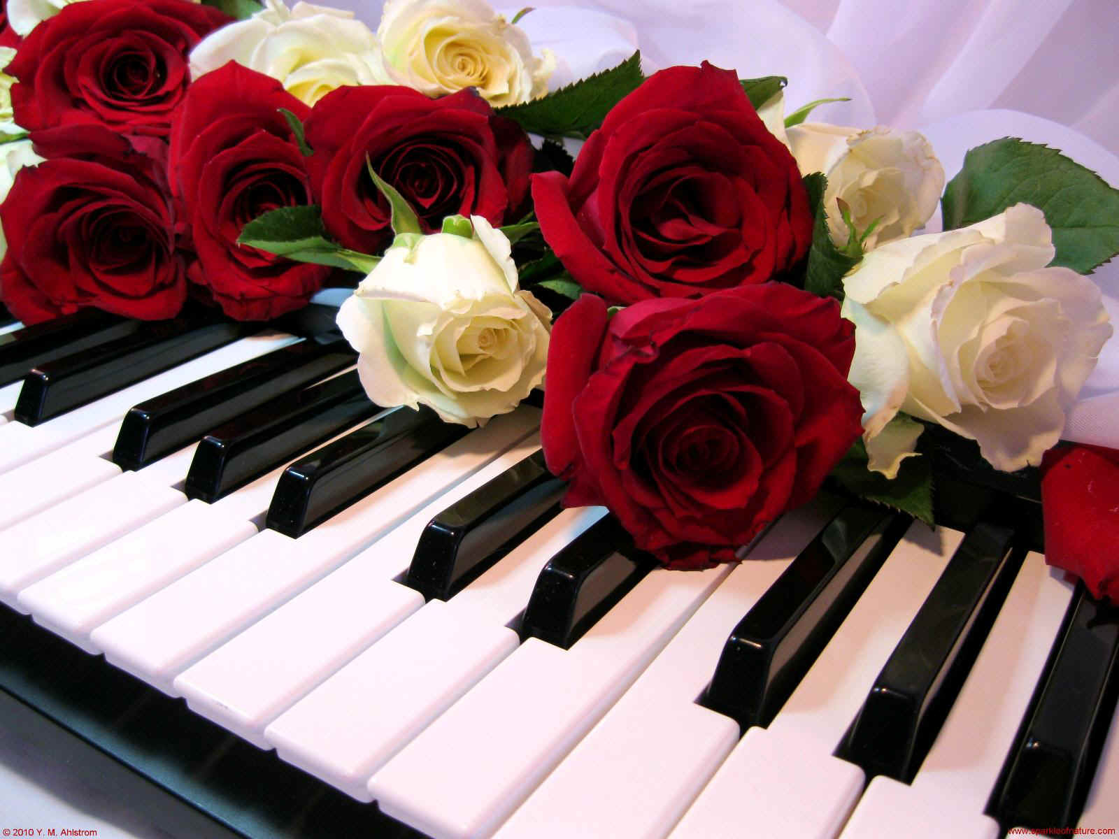 15149 roses on piano 1600x1200.jpg (198165 bytes)