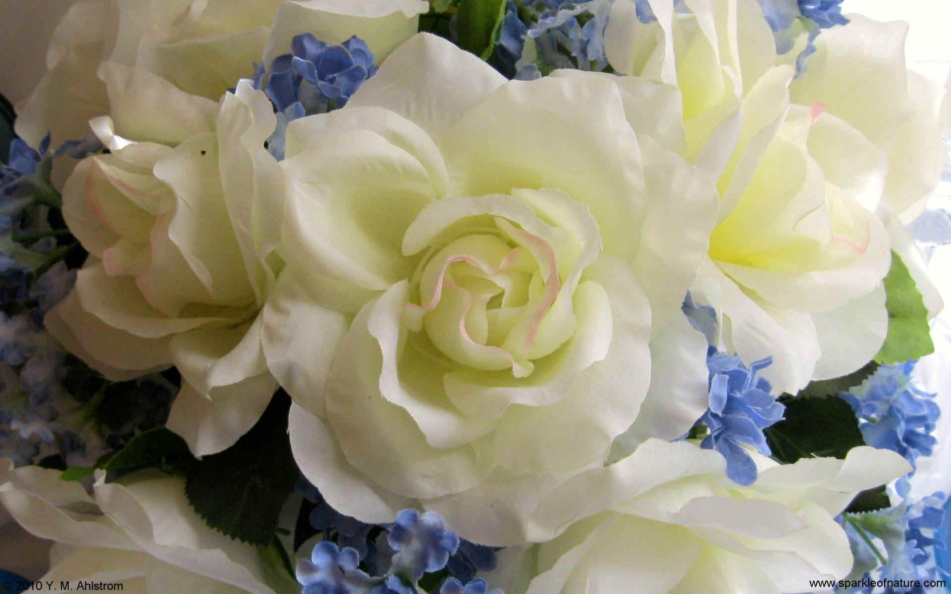 1662 white and blue bouquet w 1920x1200.jpg (199893 bytes)
