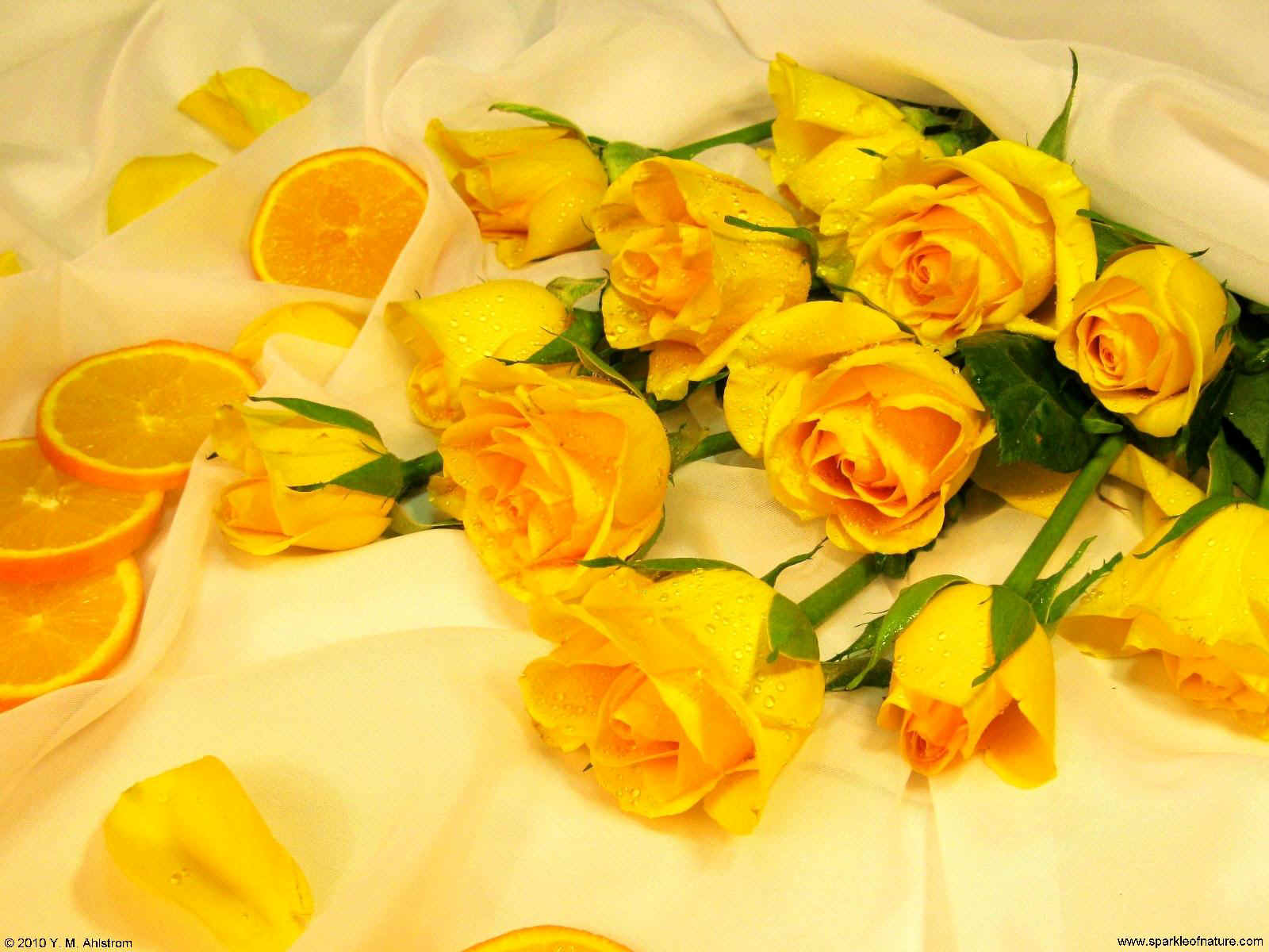 20091 oranges and yellow roses 1600x1200.jpg (213254 bytes)