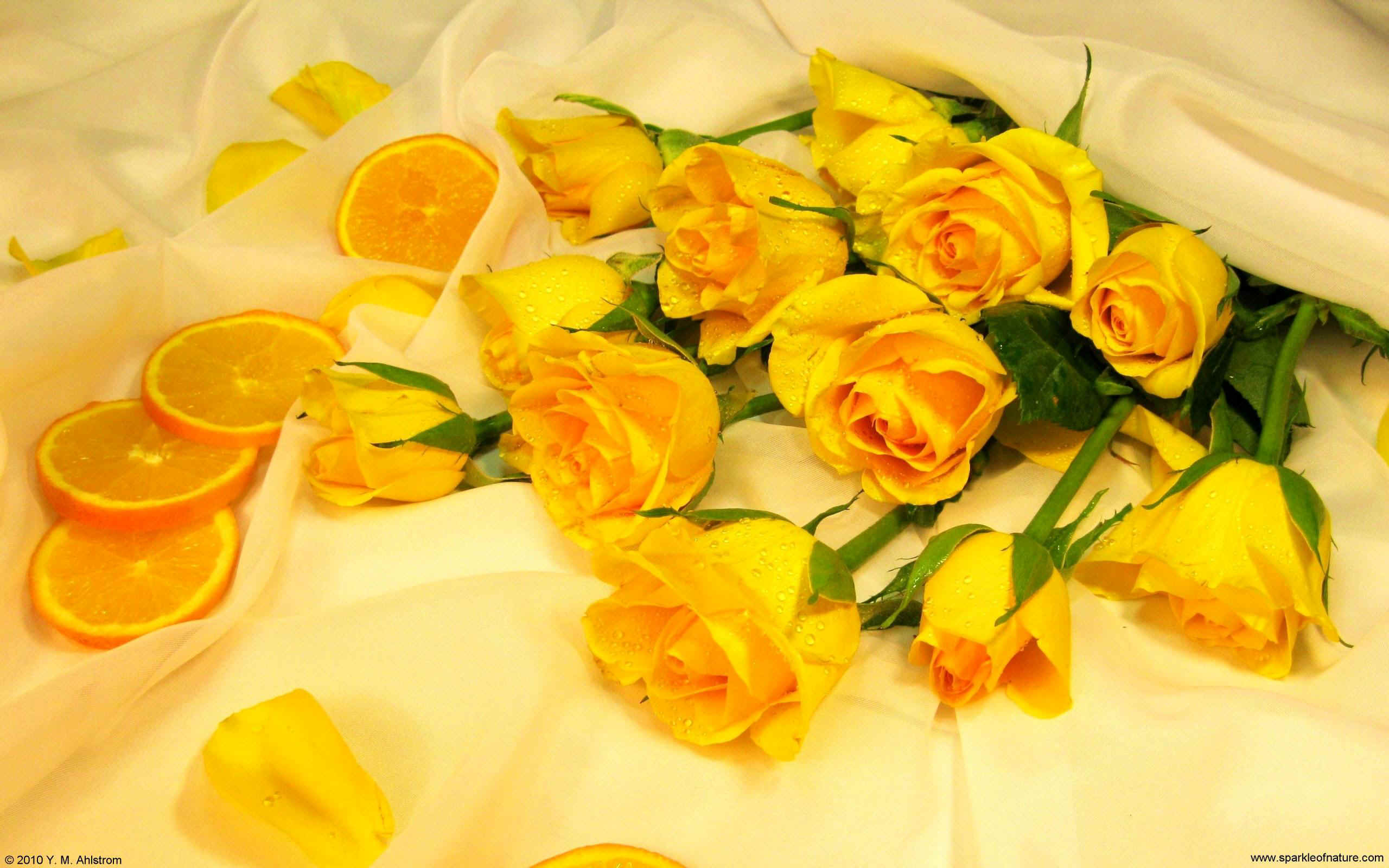 20091 oranges and yellow roses w 2560x1600.jpg (378050 bytes)