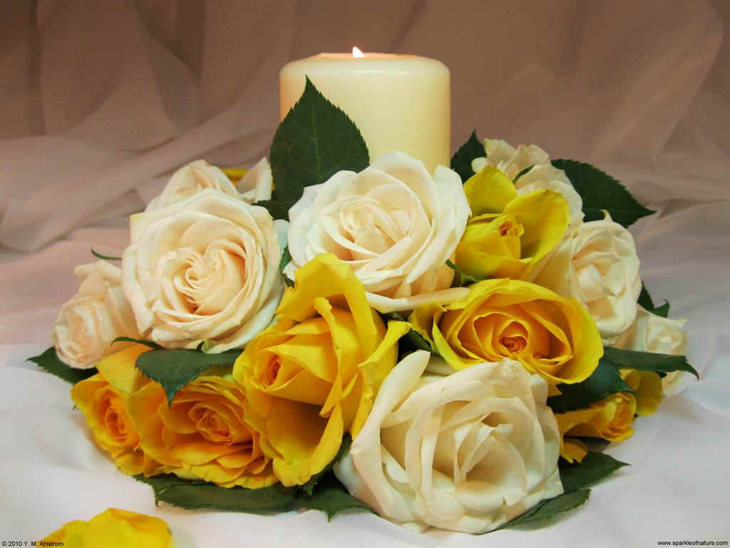 21514 yellow rose candle 1024x768.jpg (94014 bytes)