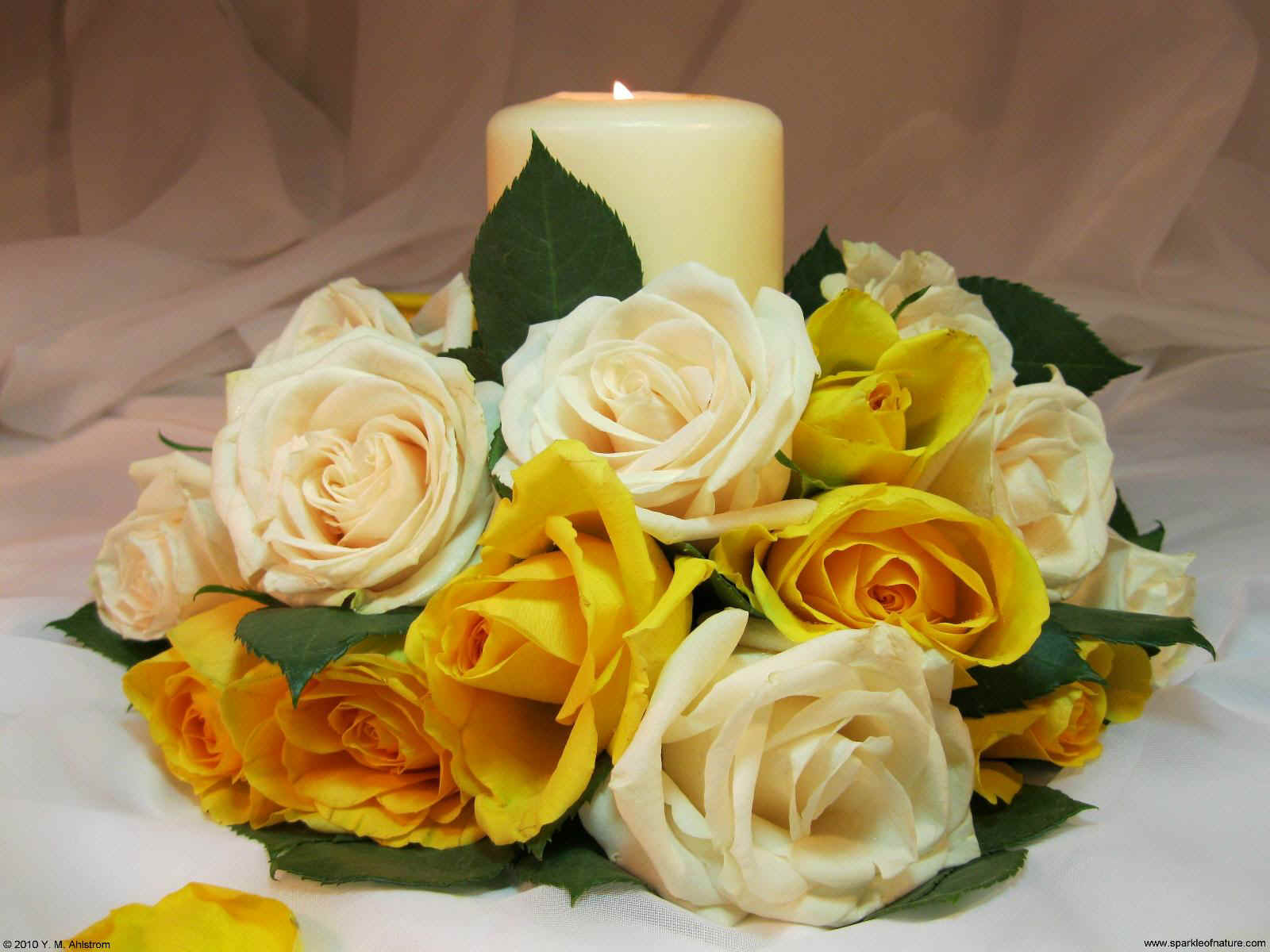 21514 yellow rose candle 1600x1200.jpg (186822 bytes)
