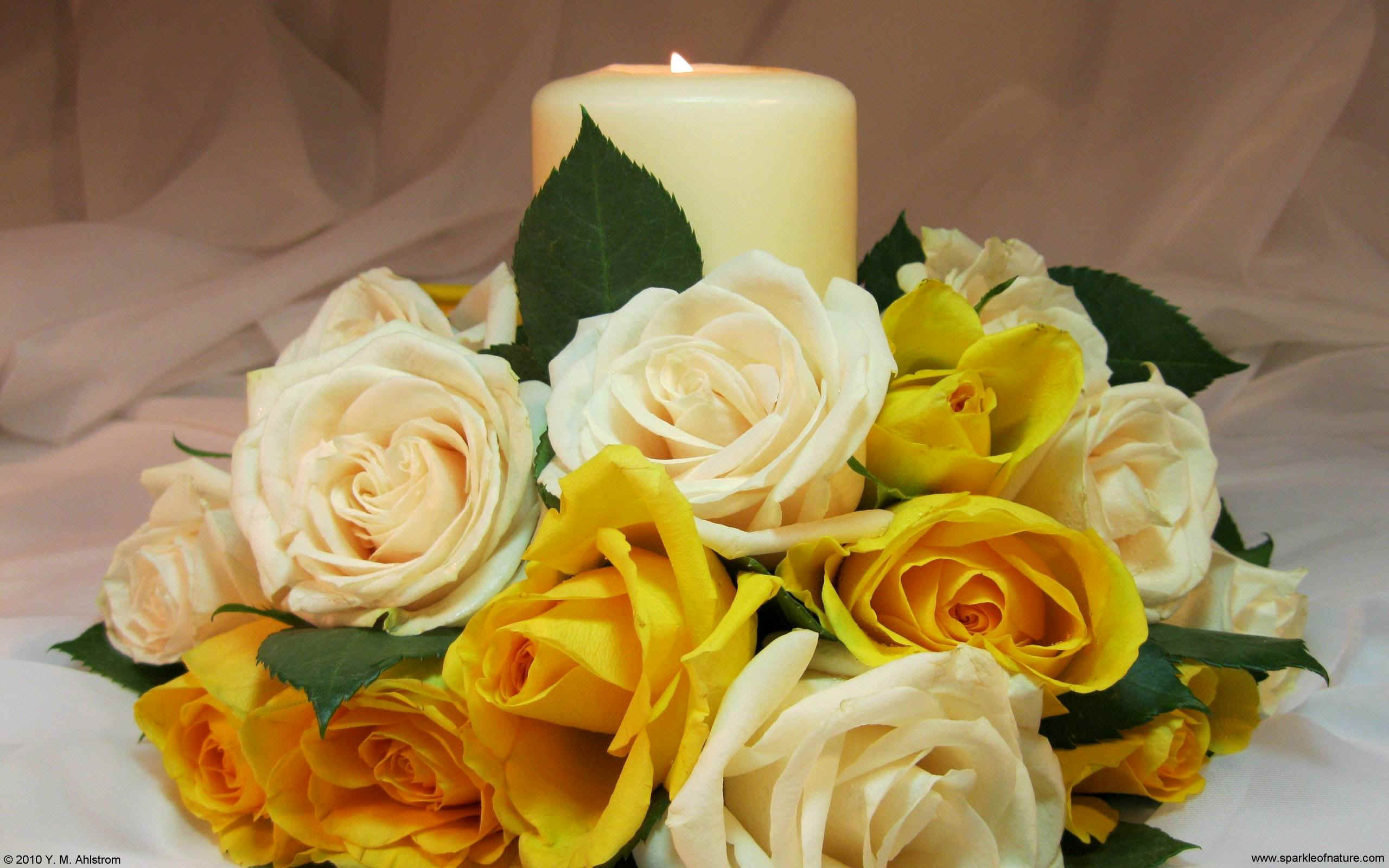 21514 yellow rose candle w 2560x1600.jpg (350712 bytes)