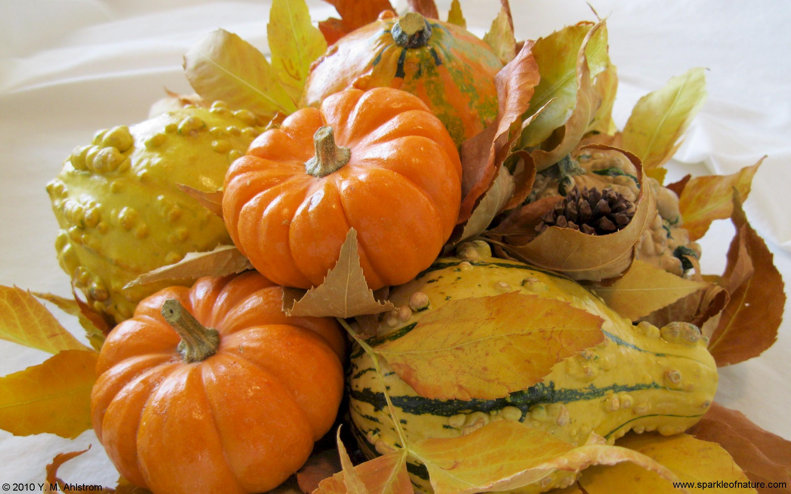 6446 harvest time pumpkins w 2560x1600.jpg (362004 bytes)