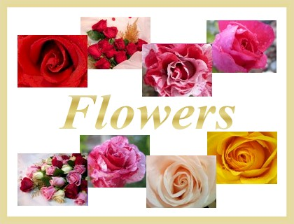 Flowers Category