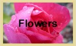Free Desktop Wallpapers - Flowers Category